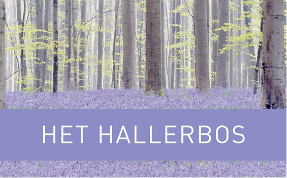 cover_Hallerbos.png